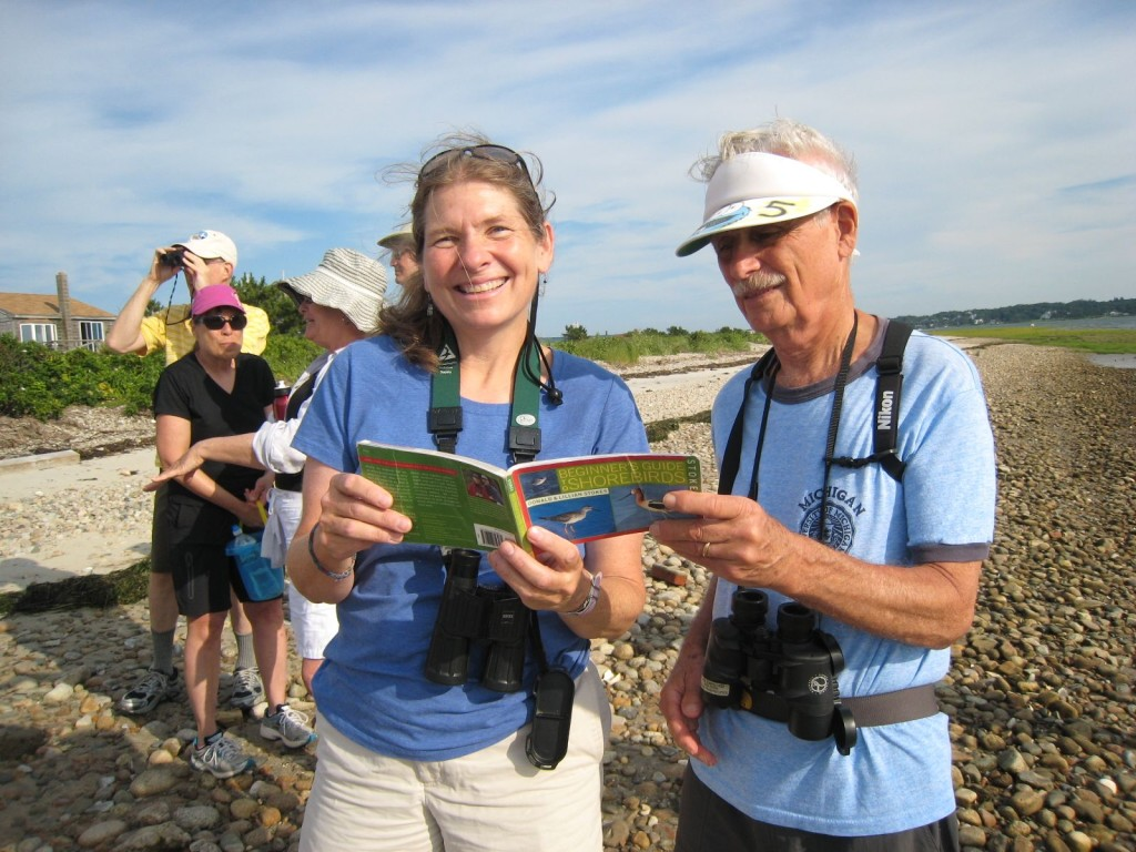 Beach Ambassadors identifying birds on the beach