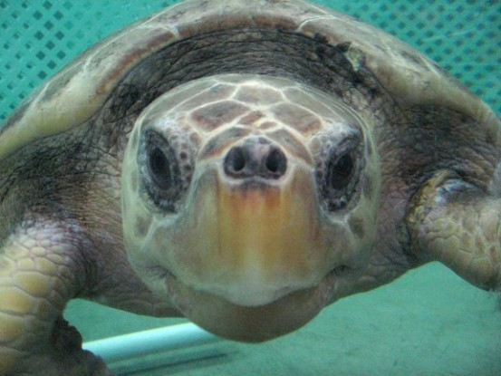 Living Life Less Plastic Lessons From Sea Turtles