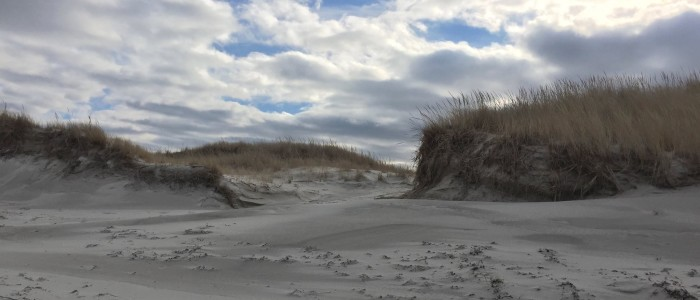 To us the dunes looked inviting for a Snowy Owl. Photo credit: Deb Harrison