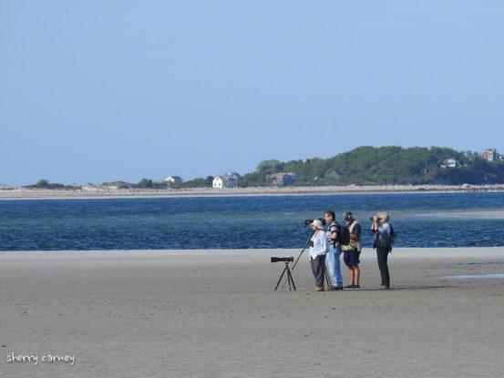 Birders on beach
